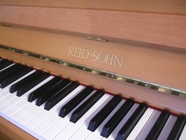 Reid Sohn Beech - close-up